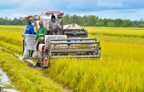 An Biên (Kiên Giang) tập trung hoạch định chuyển dịch cơ cấu nông nghiệp