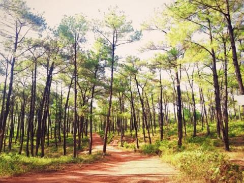 Quảng Bình tiếp tục đứng thứ 2 cả nước về tỷ lệ che phủ rừng