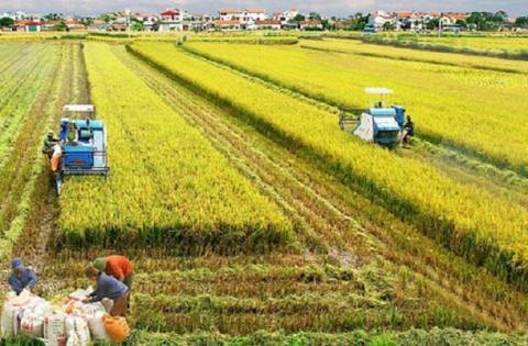 Ninh Bình: Phát triển mô hình liên kết sản xuất nông nghiệp theo hướng hàng hóa