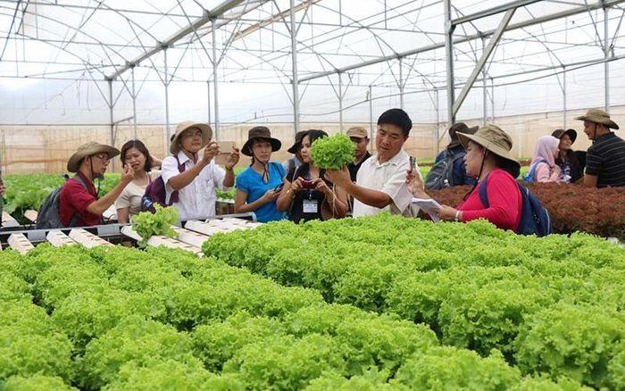 Mô hình trồng rau sạch, an toàn ở Ninh Bình. Ảnh: Internet