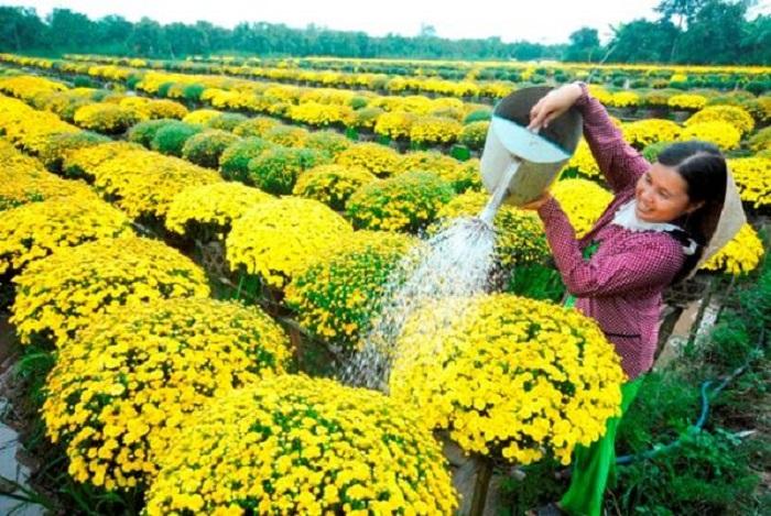 Phát triển hoa cây cảnh, góp phần nâng cao hiệu quả xây dựng nông thôn mới trên địa bàn Hà Nội. Ảnh: Internet