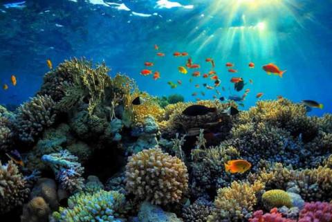 Côn Đảo: Phục hồi thành công san hô tại Khu ramsar Vườn quốc gia Côn Đảo