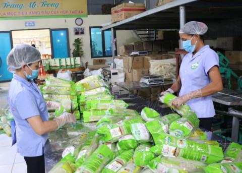 Nâng cao vai trò liên minh giữa các HTX là đòn bẩy giúp nông dân phát triển kinh tế tại Phú Thọ