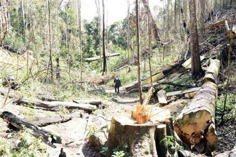 128 dự án phải bồi thường thiệt hại do để mất 1.959ha rừng tại Lâm Đồng