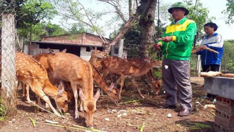 Hương Sơn (Hà Tĩnh): Nghề nuôi hươu giúp người dân xóa đói giảm nghèo