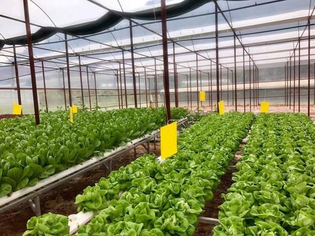 Kiên Giang: Ứng dụng khoa học công nghệ cao trong phát triển sản xuất nông nghiệp