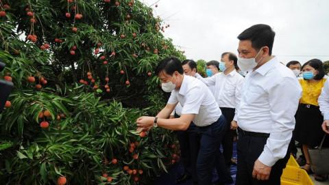 Hải Dương: Lần đầu tiên xuất khẩu vải thiều sang Thái Lan