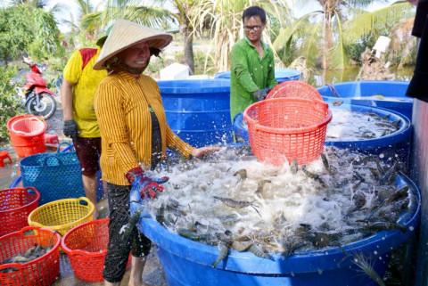 Kiên Giang: Liên kết sản xuất và tiêu thụ các sản phẩm nông nghiệp