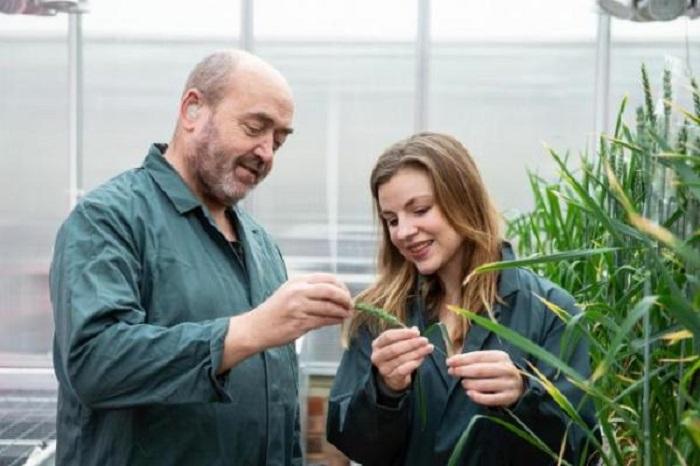 Các kỹ thuật hệ gene mới giúp cây trồng có khả năng chống chịu với bệnh tật và các điều kiện môi trường khắc nghiệt. Ảnh: Internet