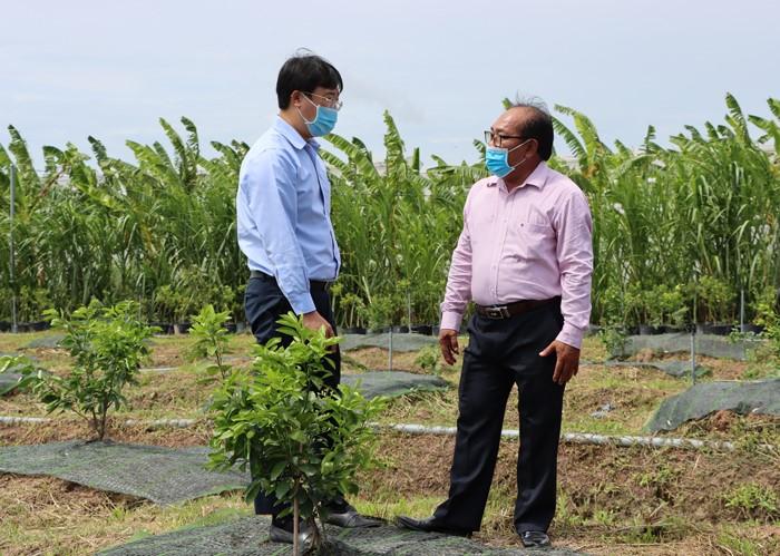 Bí thư Tỉnh uỷ Lê Quốc Phong (bên trái) đánh giá cao tính chủ động, sáng tạo của ông Trần Thành Tâm trong việc nghiên cứu giải pháp cải tạo bộ rễ cây quýt hồng của Lai Vung