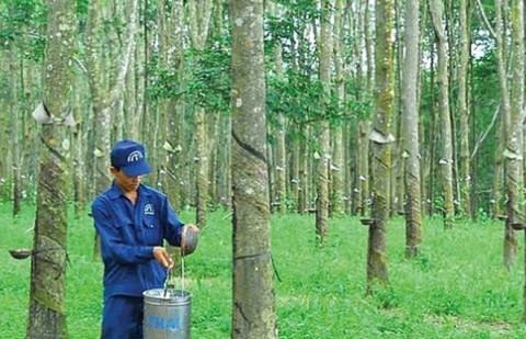 Cao Su Đồng Phú - DPR muốn tăng vốn điều lệ lên gấp đôi