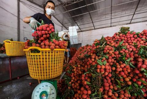 TP.HCM: Vải thiều đổ về chợ đầu mối lên đến 700 tấn/ngày
