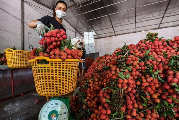 Vải thiều miền Bắc đang chiếm áp đảo trên thị trường trái cây tại TP.HCM
