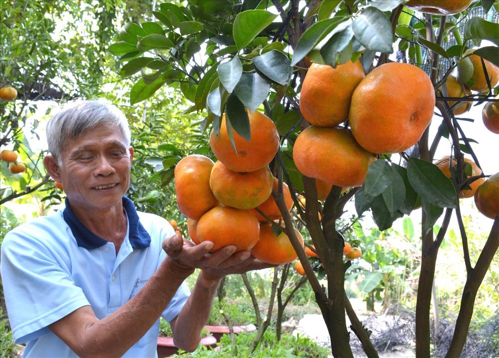 Quýt Lai Vung là một trong những sản phẩm nông nghiệp chủ lực của tỉnh Đồng Tháp