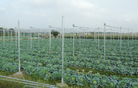 Hải Dương: Phát triển nông nghiệp ứng dụng công nghệ cao và nông nghiệp hữu cơ