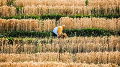 Giá thực phẩm lên mức cao nhất trong một thập kỷ ảnh hưởng đến người tiêu dùng và doanh nghiệp châu Á
