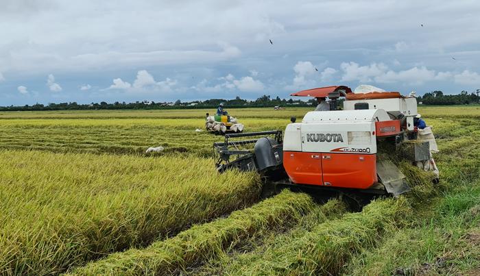 Đồng Tháp: Sáu tháng đầu năm giá trị sản xuất nông, lâm, thuỷ sản ước đạt hơn 20.500 tỷ đồng