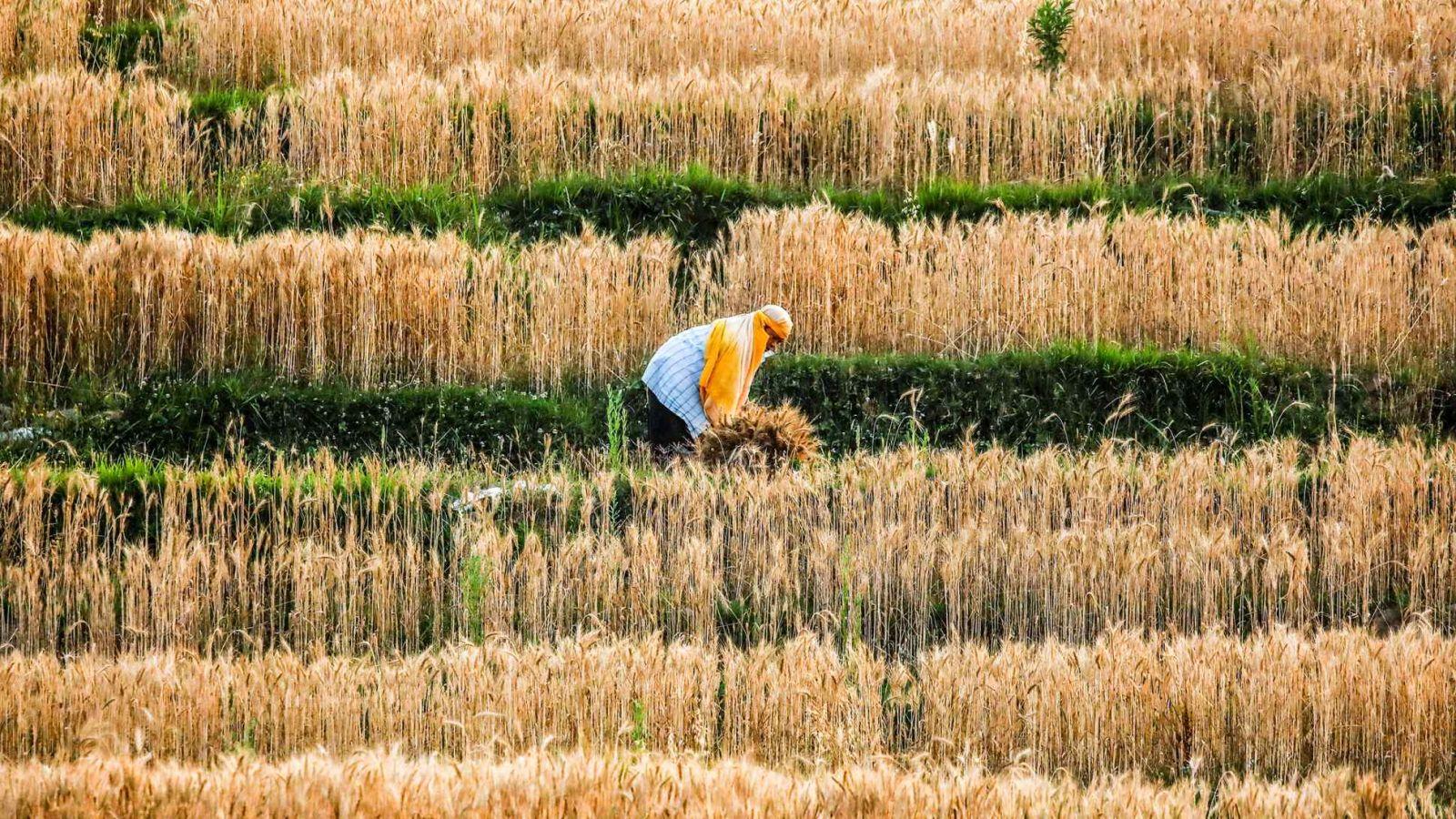 Chỉ số giá thực phẩm chuẩn do Tổ chức Nông lương Liên hợp quốc công bố, theo dõi giá thịt, sữa, ngũ cốc, dầu thực vật và đường, đã đạt mức cao nhất trong gần 10 năm. © Reuters