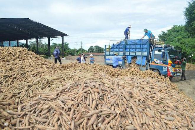 Thực phẩm Quảng Ngãi phát hành 1,8 triệu cổ phiếu trả cổ tức năm 2020