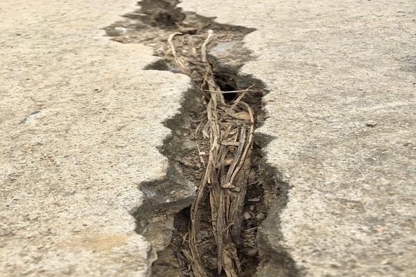 Vết nứt nằm giữa mặt đê càng ngày càng rộng và chạy dài gần hết tuyến đê