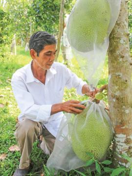 Nông dân Đồng bằng sông Cửu Long không trồng tự phát, tránh tình trạng được mùa mất giá