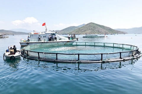 Bộ NN&PTNN đề xuất chính sách hỗ trợ một lần sau đầu tư đối với cơ sở nuôi trồng thuỷ sản trên biển