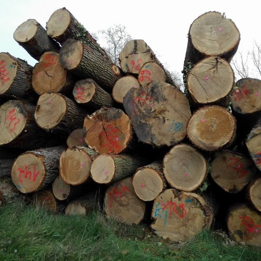 Bộ Công an thông báo tìm chủ của lô hàng trên 50 m3 gỗ giáng hương