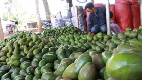 Tây Nguyên cần một giải pháp cho thị trường nông sản