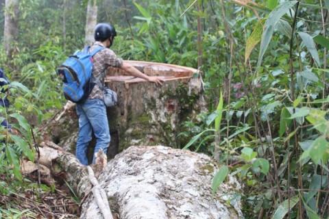 Nhà báo môi trường: Nghề hiểm nguy và cần được bảo vệ