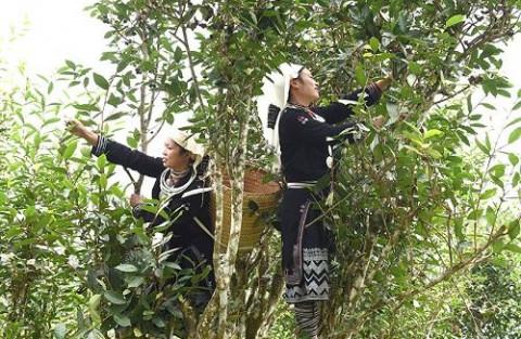 Tuyên Quang: Nâng cao giá trị kinh tế nhờ sản phẩm OCOP