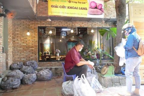 Một câu lạc bộ thiện nguyện tiêu thụ 10.000 tấn khoai lang cho tỉnh Vĩnh Long