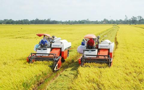 Bộ Nông nghiệp Mỹ hạ dự báo xuất khẩu gạo của Việt Nam