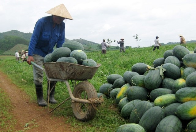 Nghệ An chỉ đạo tháo gỡ khó khăn, thúc đẩy tiêu thụ, vận chuyển nông sản tại các địa phương trong điều kiện dịch Covid-19