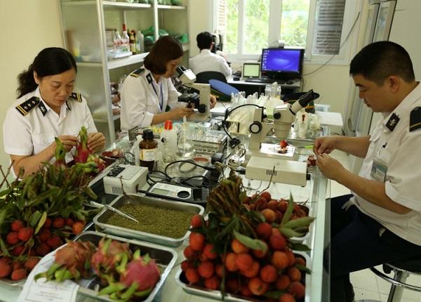 Đối với nhà xuất nhập khẩu về mặt hàng thực vật, sẽ không tránh khỏi việc thực hiện các thủ tục làm kiểm dịch thực vật. Hàng hóa này thường dễ bị sâu bệnh và các loại cỏ dại nguy hiểm nên các bên hải quan cần làm để hạn chế việc lây lan từ quốc gia này tới quốc gia khác