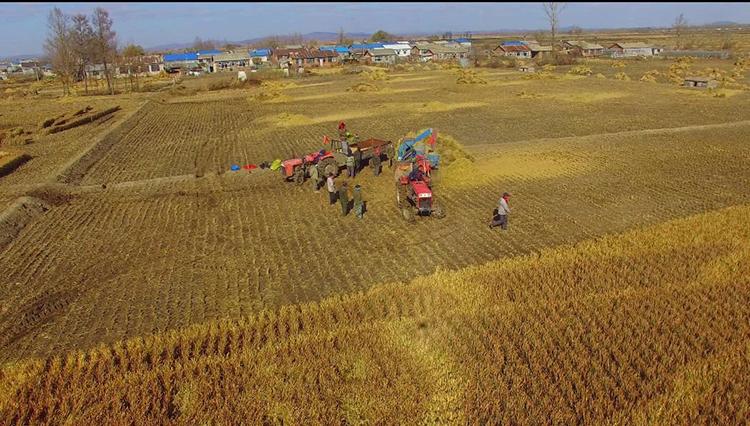 Trung Quốc thúc đẩy phát sóng trực tiếp thương mại điện tử tái sinh ngành nông sản nông thôn