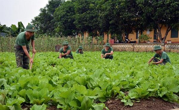 Sử dụng đất quốc phòng, an ninh kết hợp với hoạt động lao động sản xuất, xây dựng kinh tế để tổ chức tăng gia sản xuất nông nghiệp