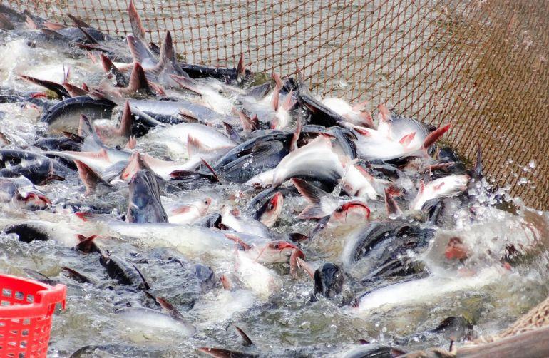 Doanh nghiệp đầu tư nuôi trồng thủy sản được hỗ trợ 15 tỷ đồng/dự án
