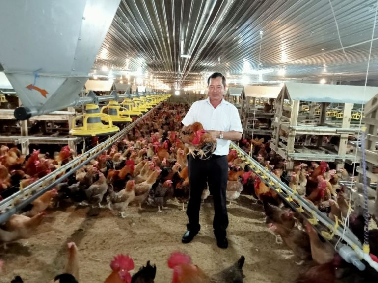 Hiệu quả kinh tế cao từ việc mạnh dạn chuyển đổi công nghệ chăn nuôi ở trại gà huyện Phú Giáo