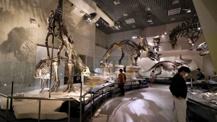 Bảo tàng hóa thạch khủng long