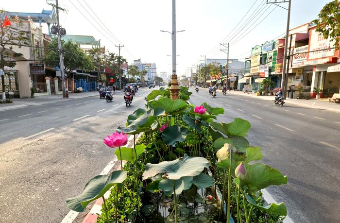 Hoa sen được trồng trên khắp các tuyến đường của tỉnh Đồng Tháp. Đây là tuyến đường 30/4, phường Mỹ Phú, thành phố Cao Lãnh