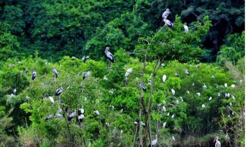 Phú Thọ: Ban hành chỉ thị tăng cường quản lý việc buôn bán, kinh doanh để bảo vệ các loài động vật, chim hoang dã