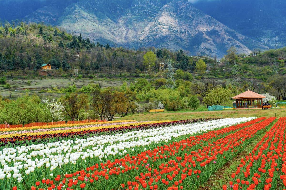 Vẻ đẹp mê hoặc của những thung lũng ở Ấn Độ