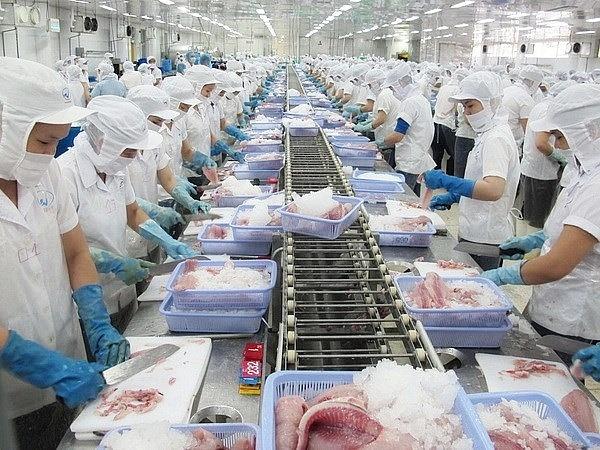 Từ tháng 7, xuất khẩu cá tra, cá ngừ, mực, bạch tuộc có dấu hiệu chững