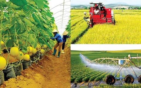 Thay đổi phương thức thực hiện một số thủ tục hành chính cho doanh nghiệp nông nghiệp
