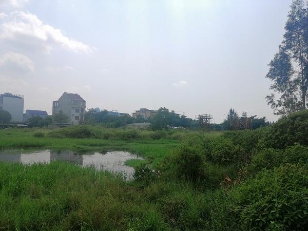 Hà Tĩnh xem xét thu hồi đất tại loạt công ty sai phạm