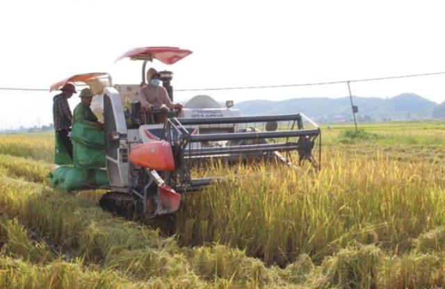 Quỳnh Lưu (Nghệ An): Doanh nghiệp liên kết tiêu thụ sản phẩm lúa Hè thu hiệu quả cho nhà nông trong đại dịch Covid-19