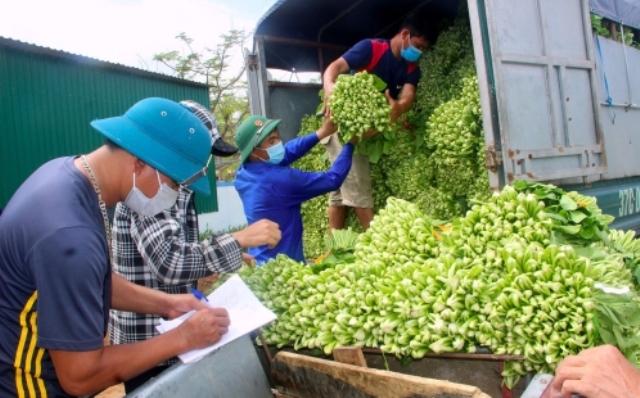 """Nghệ An: Doanh nghiệp phối hợp với TP. Vinh """"giải cứu"""" rau xanh cho nông dân huyện Nghi Lộc"""