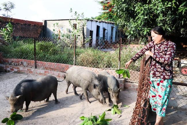 Tiếp vốn chính sách cho nông dân nghèo đổi vận