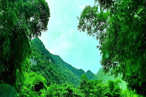 Thanh Hóa: Lập kế hoạch bảo vệ rừng tại huyện Như Thanh giai đoạn 2021- 2030