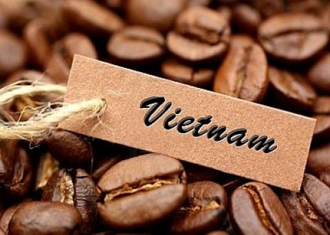 Dự báo xuất khẩu cà phê sang Hàn Quốc tăng